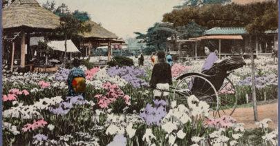Iris garden at Horikiri, Tokyo