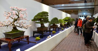 kokufu_bonsai
