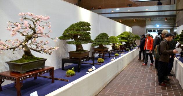 kokufu_bonsai
