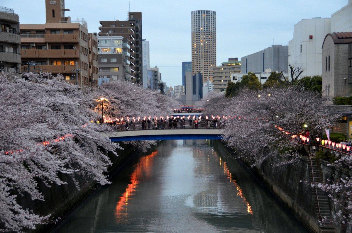 meguro-river-sakura