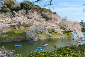 Sakura at Chidorigafuchi Moat