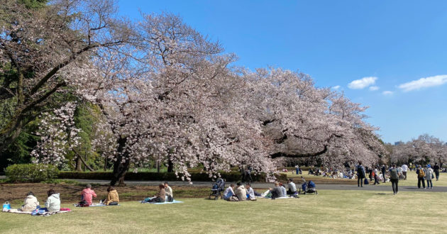 Hanami 2021: Shinjuku Gyoen National Garden