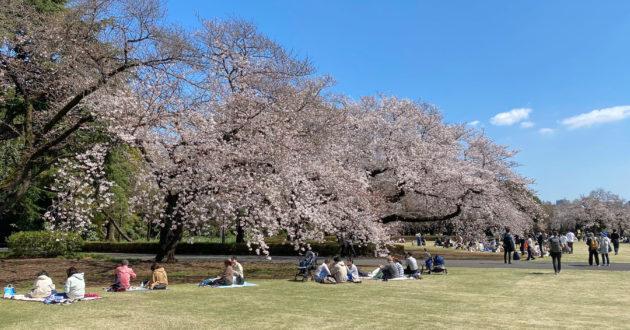 Hanami 2021: Shinjuku Gyoen National Garden